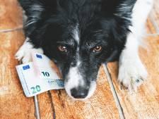 Hondenbelasting in Grave wordt geschrapt
