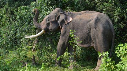 Wilde olifant vertrappelt twee vrouwen in Nepal