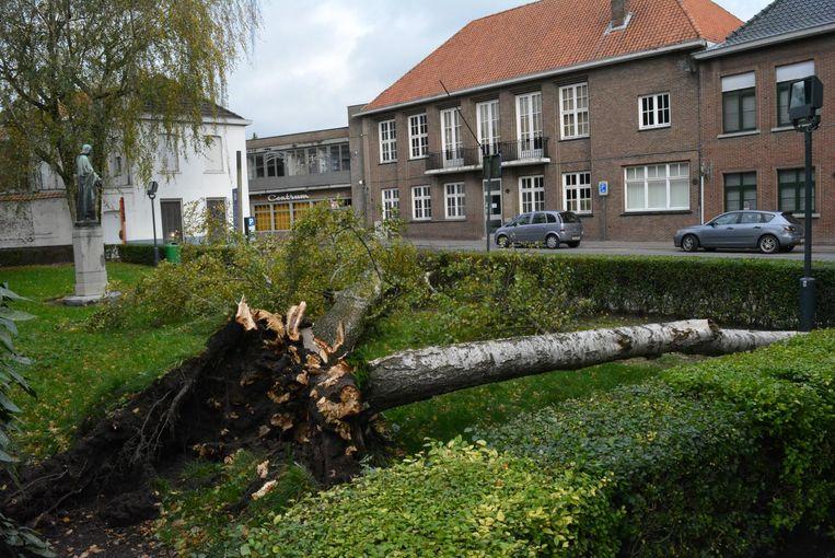 Op het Heilig Hartplein achter de kerk van Torhout werd de grote oude beuk uit de grond gerukt. De kruin kwam op enkele auto's op de parkeerplaats terecht, maar de schade bleef beperkt.