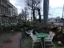 Boom omgewaaid op Rijnkade, Arnhemmer met de schrik vrij