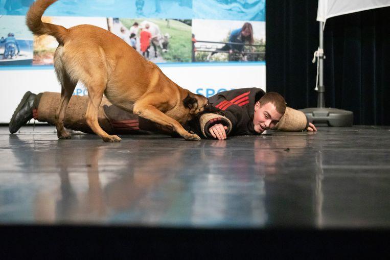 Kampioenenviering Kampioenen 2019 Lummen Demonstratie diensthonden met hondenmeester Pascal Daniels