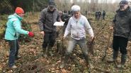 Boomplantactie: Natuurpunt vervangt Amerikaanse eiken en populieren in Kluizenbos door inheemse bomen