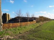Raad geeft zich gewonnen: varkensboer kan in Moergestel geen milieustudie opgelegd worden