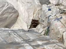 Wasbeerfamilie gered van dood in shredder bij plasticbedrijf