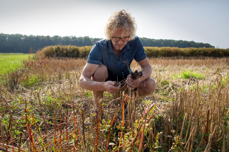 Arjen Verschure inspecteert op zijn akker het gewas.