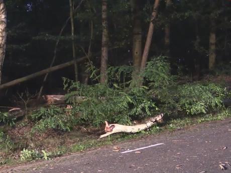 Meer risicobomen weggehaald na ernstig ongeluk 8-jarig meisje Haarle