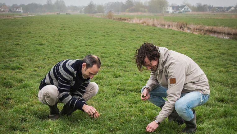 Martijn Postma (links) en Roel Kramer in een weiland langs de Amstel. Beeld Dingena Mol