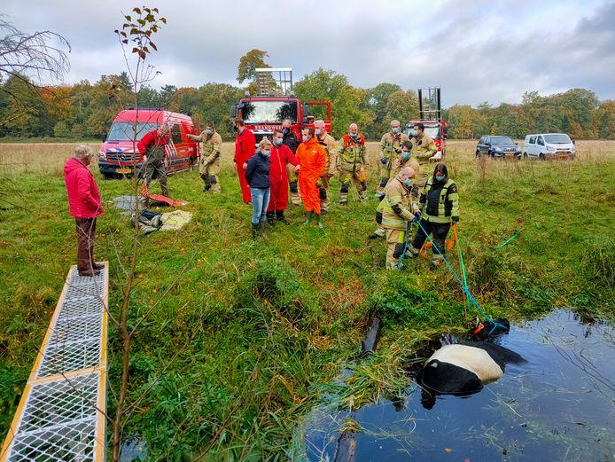 Een koe is in het water terechtgekomen. De brandweer hielp het dier op het droge.