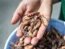 Weet wat je eet: waarom wordt 90 procent van onze noordzeegarnalen in Marokko gepeld?
