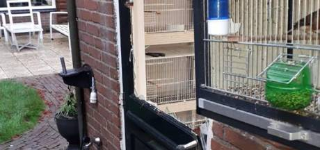 33 vogels gestolen in Losser