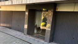 Verdwaald hertje loopt appartementsblok binnen en slaat gewond op de vlucht