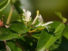 Deze planten bloeien in de wintermaanden