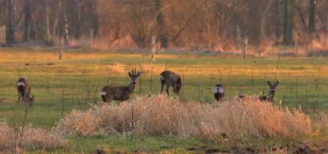 De mens is nooit ver weg in 't Gulden Land bij Helmond en Laarbeek