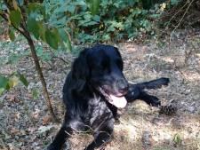 Hond Lossie is wel gezien maar nog niet gevangen