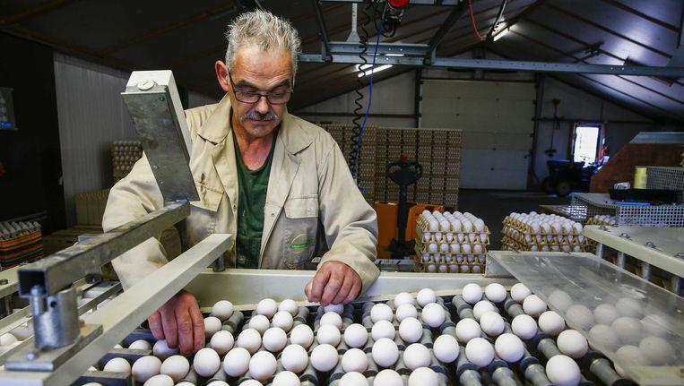 Een eierhandel in Doornenburg waar 200 duizend eieren liggen opgeslagen die door de NVWA niet worden vrijgegeven voor consumptie. Beeld null