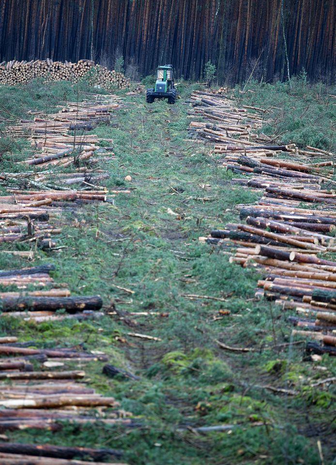 Reeds gekapte bomen in het gebied.