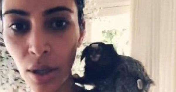 Zussen Kardashian op het matje geroepen door apenopvang Almere