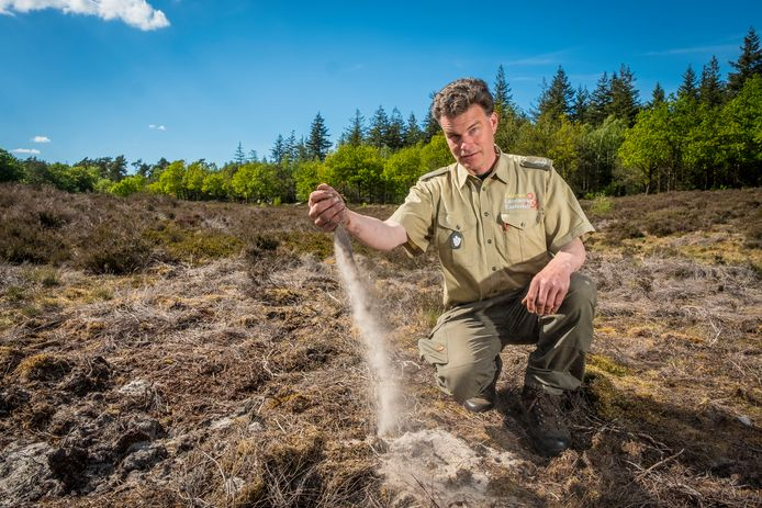 Boswachter Ger Verwoerd toont hoe droog de bodem is op de Veluwe.