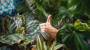 Kerstboom weg: vul de lege hoek op met een trendy plant