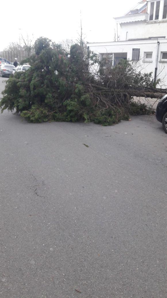 Aan de Kielsevest viel een  boom om.
