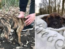 Puppies voor dood achtergelaten in vrieskou