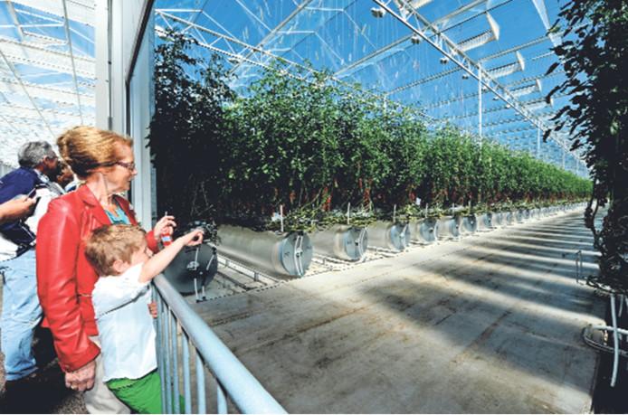 Tomatenkweker Red Star beschikt over een hypermodern kassencomplex in Dinteloord. Bij de aanvraag van energiesubsidies zou er echter fraude zijn gepleegd. Betrokkenen ontkenden dat gisteren bij de Haagse rechtbank