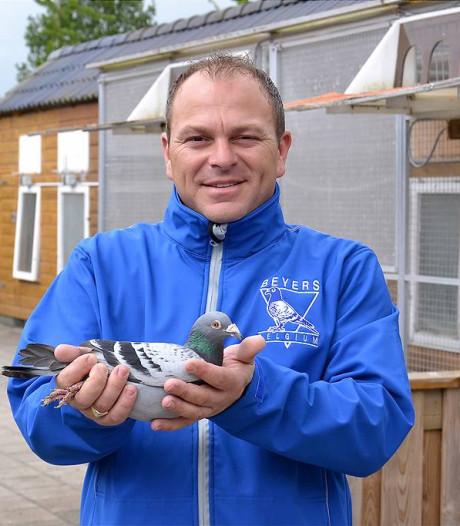 Negentig duiven in Yerseke gestolen: schadepost van 75.000 euro