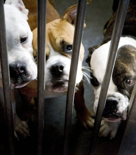 Spitsuur voor dierenasiels, zelfs de 'langzitters' vinden baasje