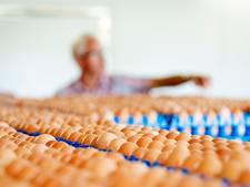 Chickfriend-bestuurder (24) uit Nederhemert blijft vastzitten in zaak fipronil-eieren
