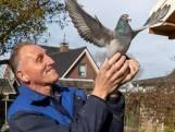 Het leven van Paul van den Bogaard draait om zijn duiven: 'Van kinds af aan was ik al gefascineerd door vogels'