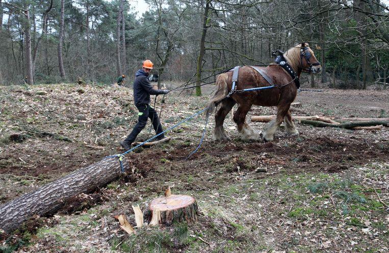 Machines zouden de grafheuvel kunnen beschadigen, daarom worden paarden gebruikt.