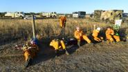 Bosbranden in Nieuw-Zeeland terwijl brandweerlui Australië helpen blussen