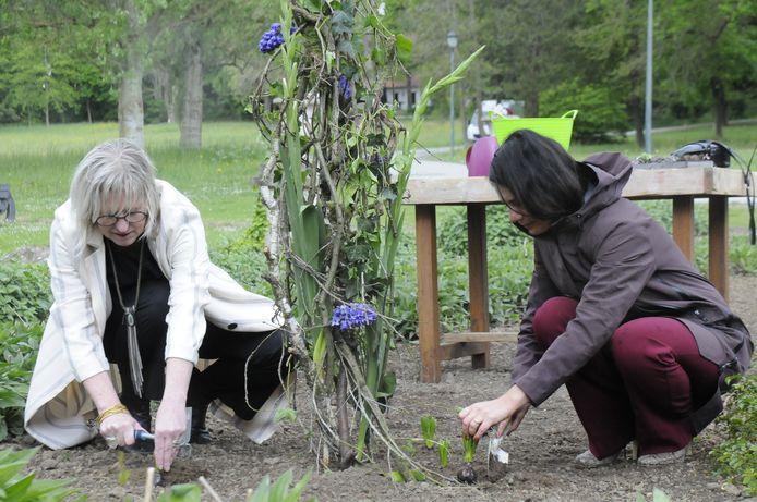 Monique De Dobbeleer plant samen met Fatma Taspinar enkele bloembollen in het Domein van Kwabeek.