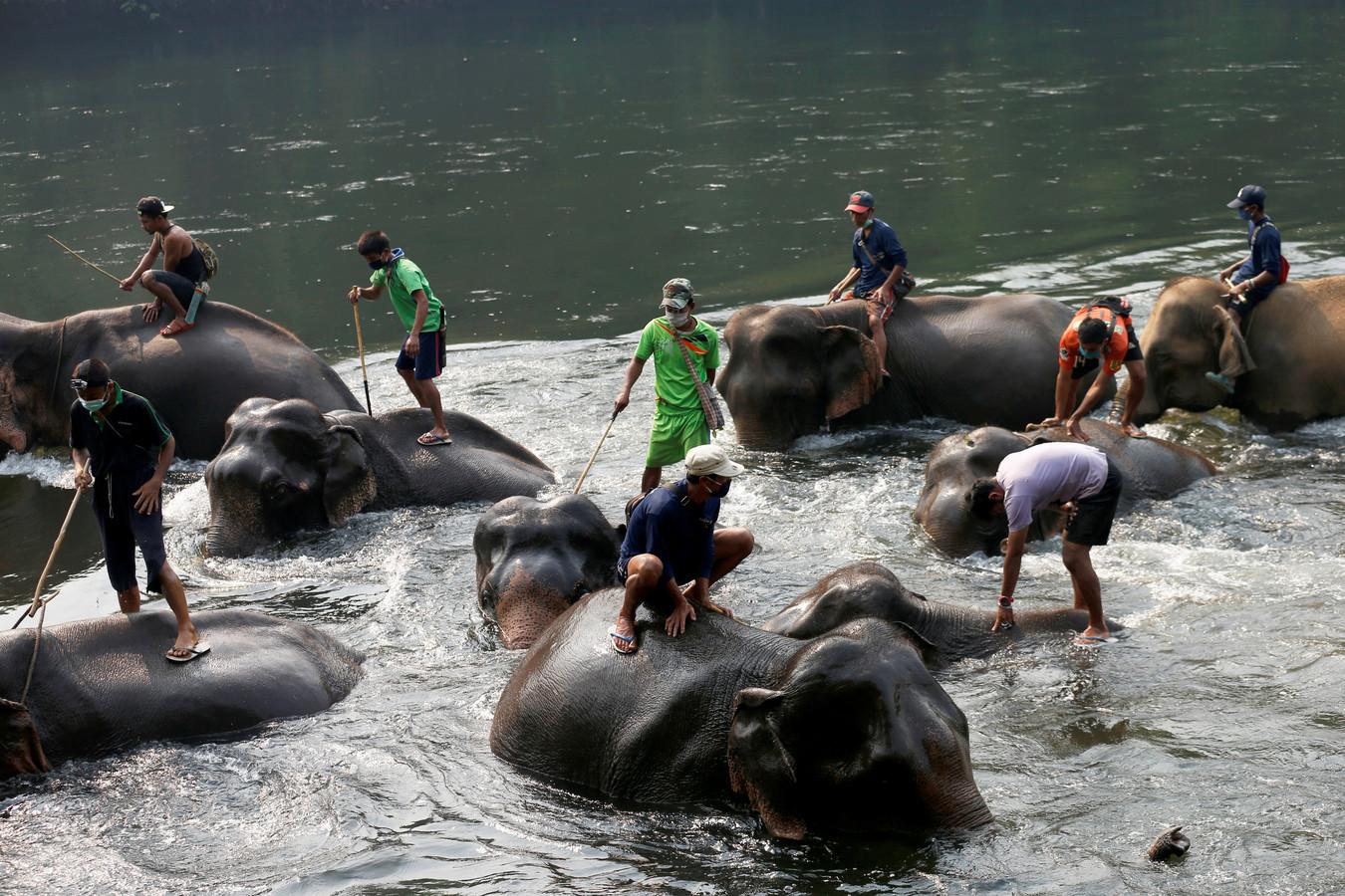 Olifanten in een olifantenkamp krijgen een bad.