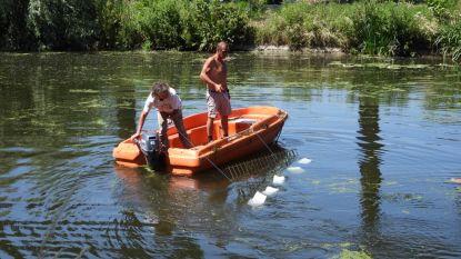 Zwemmers verwijderen eigenhandig waterplanten uit Damse Vaart