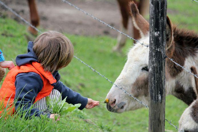 L'environnement a une grande importance pour l'évolution des enfants, dans les pédagogies alternatives.