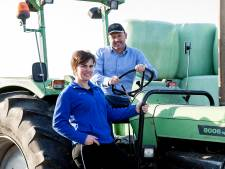 'De veelbesproken hittestress treft vooral de boer, niet het vee'