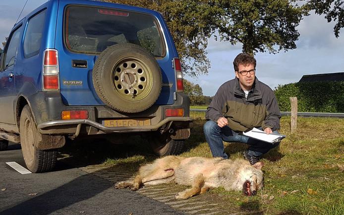 Hugh Jansman deed op locatie onderzoek bij de dode wolf langs de N343.