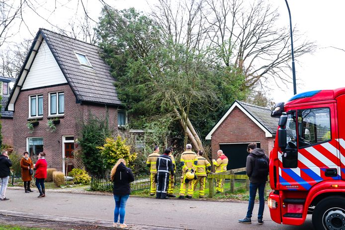 Een hoge boom 'leunt' tegen het dak van een huis in Apeldoorn.