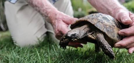 Schildpad uit auto gezet midden op de weg in Ahaus
