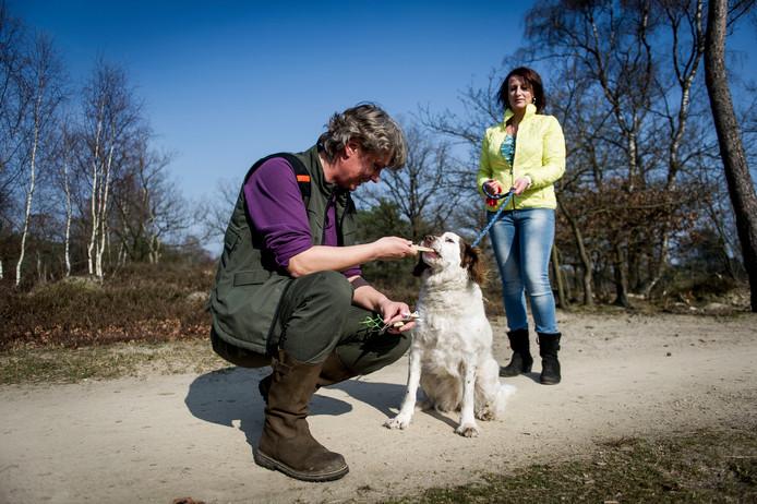 Boswachter Ine Nijveld beloont een hond met een koekje, omdat de viervoeter keurig is aangelijnd.