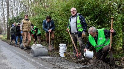 Vrijwilliger bereiden paddenoverzetactie voor