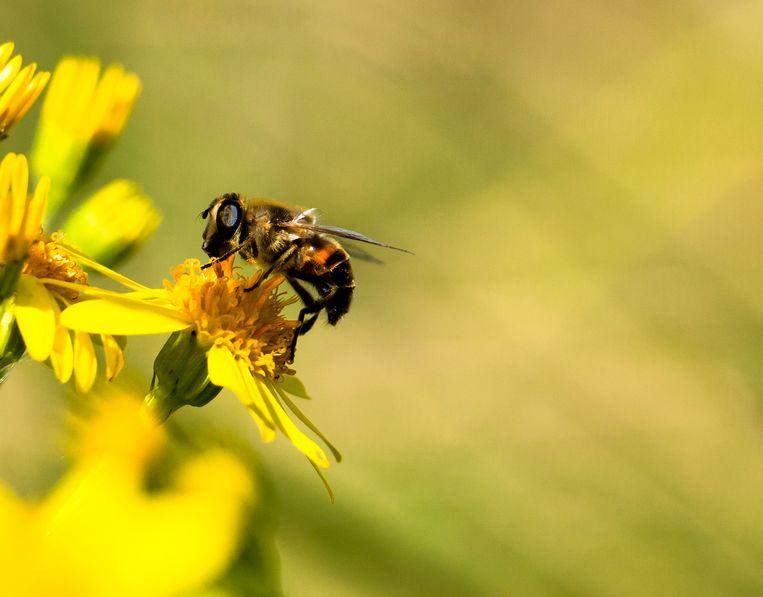 Bee bij bijen bees
