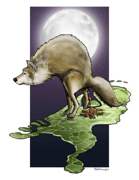 Wolven markeren met keutels hun leefgebied. De wolvin op de noordelijke Veluwe laat aan de lopende band zien (en ruiken) dat dit haar territorium is. Het is onmiskenbaar: de wolf is terug in ons land.
