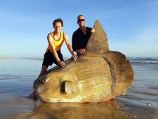 Zeldzame maanvis van bijna twee meter spoelt aan op Australisch strand