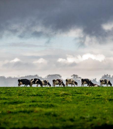 Rucphens plan voor meer koeien in de stal onderuit gehaald