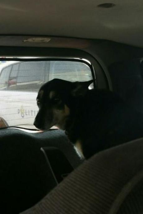 Politie bevrijdt hond uit snikhete auto
