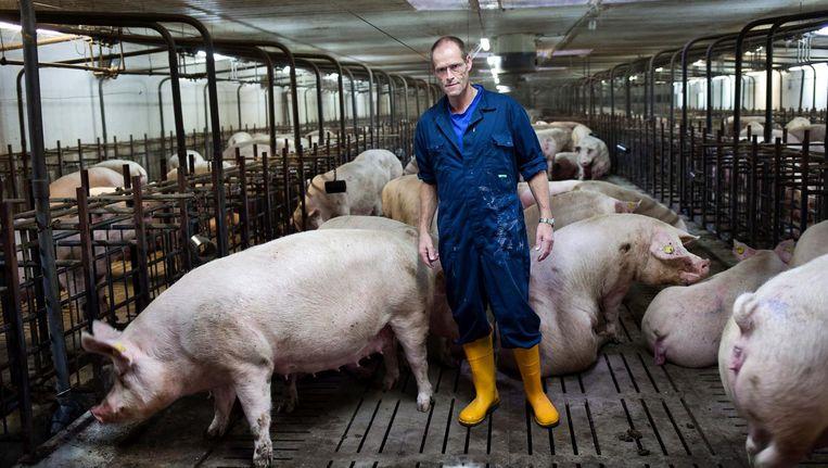Adriaan Straathof in 2013 in een van zijn stallen in Duitsland Beeld Hollandse Hoogte