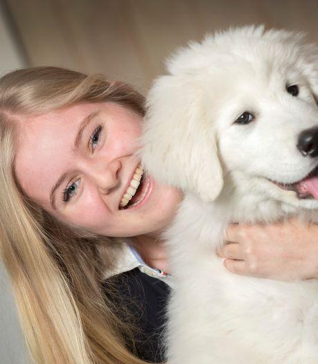 Een hondje nemen is razend populair in coronatijd: puppycursussen kunnen vraag amper bijhouden