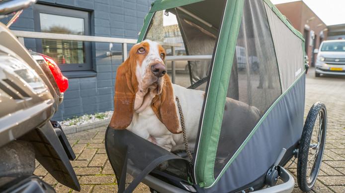 Hond Peer achter in zijn wagentje, waarin in hij volgend jaar naar de Ardèche zal rijden.
